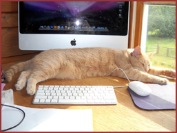 cat sleeping next to keyboard