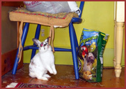 bunny rabbit gazing up at bag of rabbit food