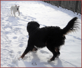 two dogs in snow: Duce, Riley