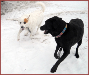 two dogs in snow: Essie, Bubba