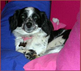 dog Rue on pink-and-blue cushion